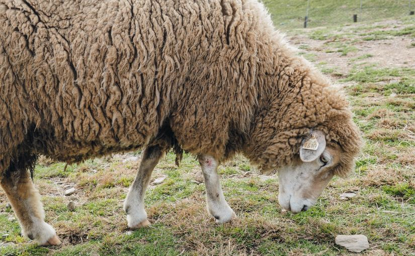7 Ways to Shepherd Children